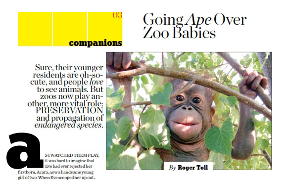 Going Ape over Zoo Babies